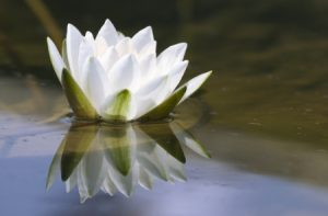 Read more about the article All You Need to Know about Mindfulness