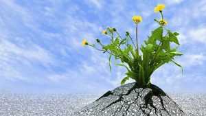 Read more about the article What is Resilience?