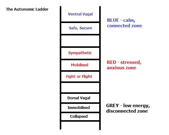You are currently viewing The Polyvagal Ladder