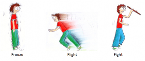 Read more about the article Fight, flight and freeze